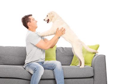 Hundesofa aus Rattan