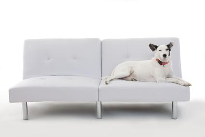 Hundesofa aus Leder