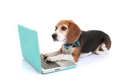 Hundesofa aus Weide online kaufen