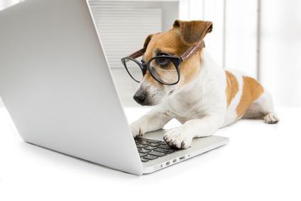 Leder Hundesofa online kaufen