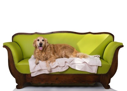 Polster und Material Hundesofa