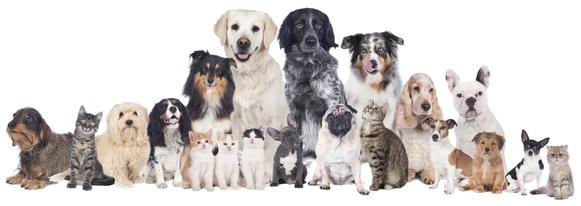 Welche Sofa Größe für welchen Hund
